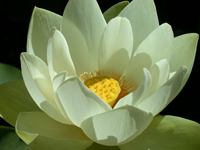 Hawaii Retreat - Open Lotus
